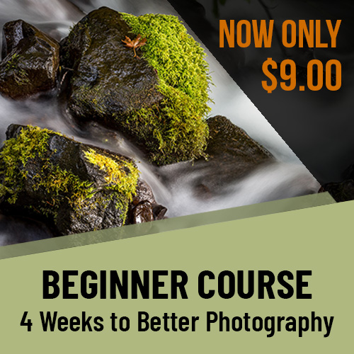 4 weeks to better photography on sale
