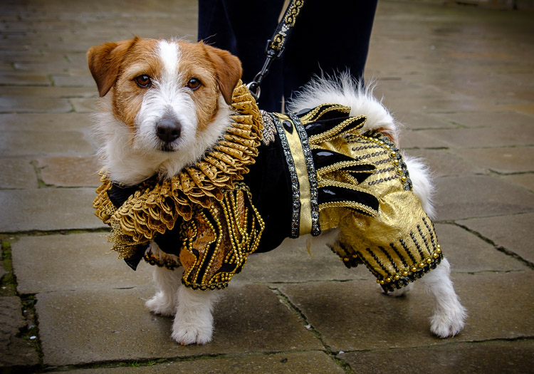 a Dog at Venice carnival in costume