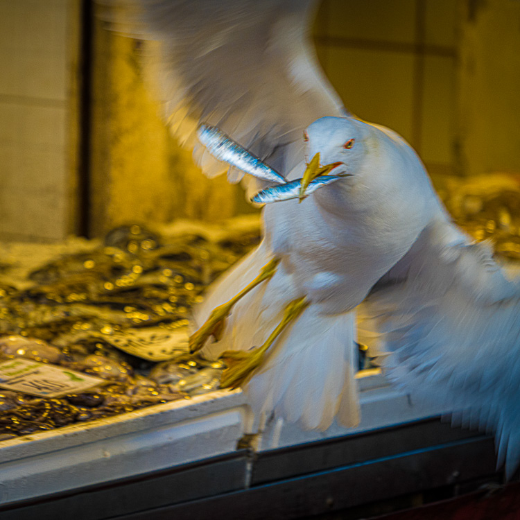 Bird caught stealing fish from the market vendor - photo by Chris Lord