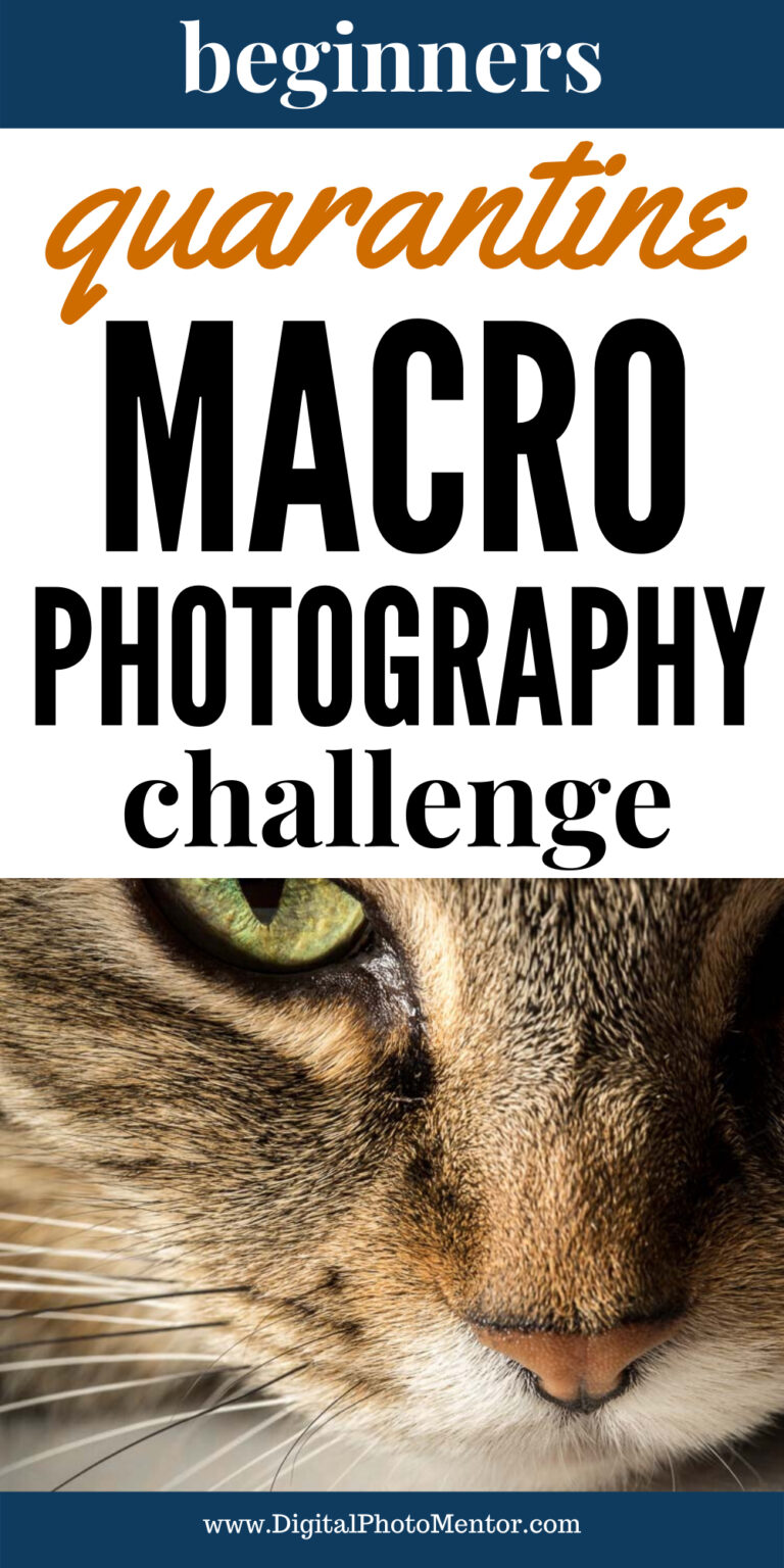 quarantine photography challenge macro