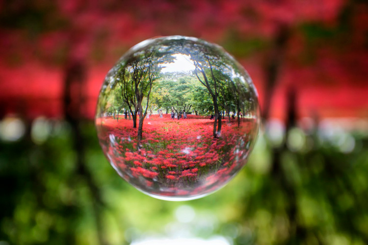 What Is Lensball Photography And How To Get Started