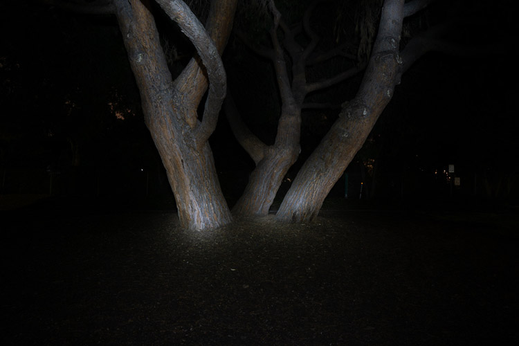 tree trunks painted with light to make them stand out more