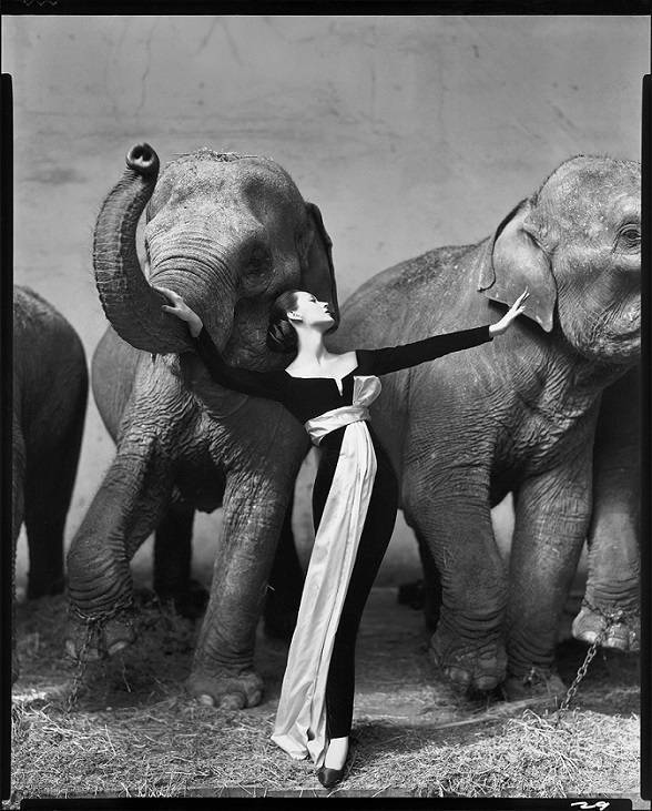 One of Avedon's most famous portrait photos of a woman and elephants