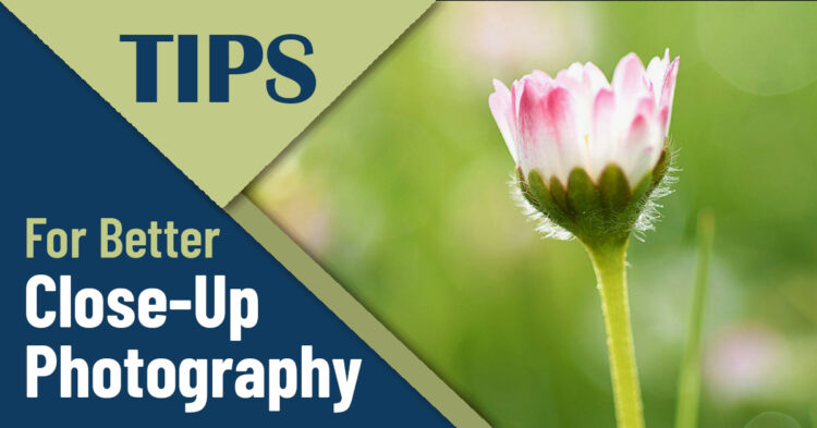 6 Tips for Taking Stunning Close-Up Photos