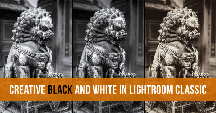 Getting Creative with Black and White Photos in Lightroom Classic